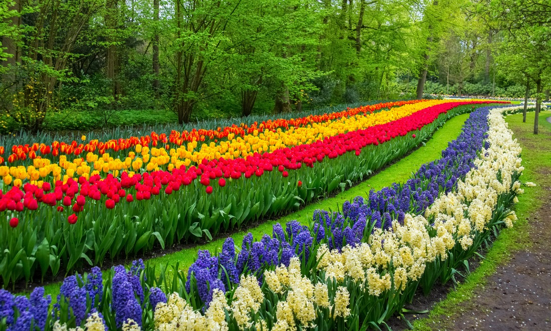bigstock-beautiful-spring-flowers-in-ke-120986741.jpg