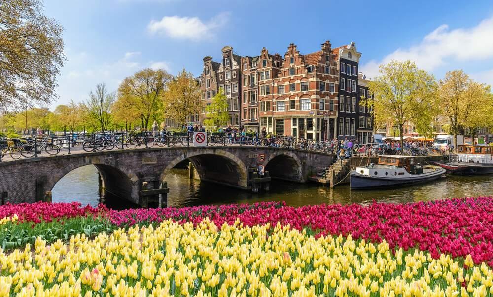 Amsterdam Tulip Festival Online