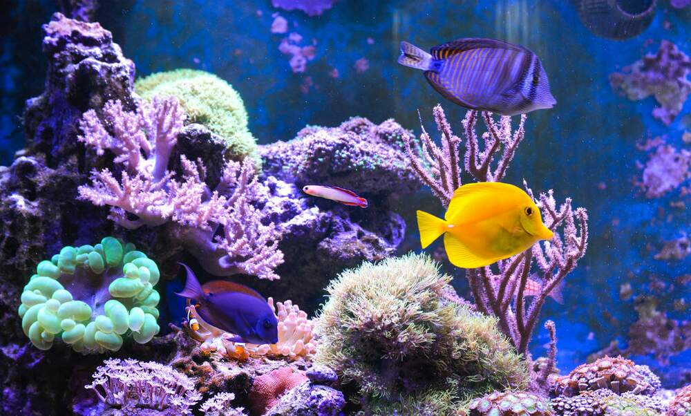 5 aquariums in the Netherlands you need to see