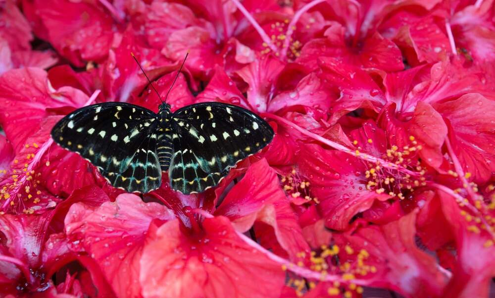 5 beautiful butterfly parks in the Netherlands