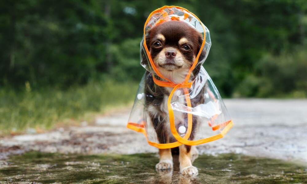Choosing the best dog care option when living abroad