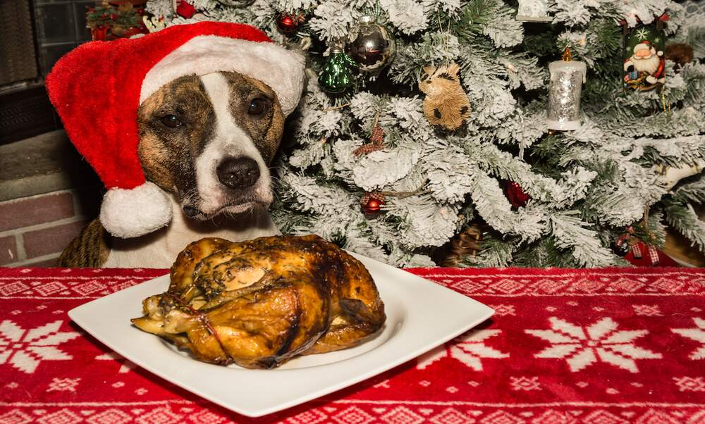 Christmas dinner for dogs in Eindhoven