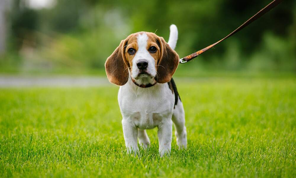 Tips on getting a dog in the Netherlands