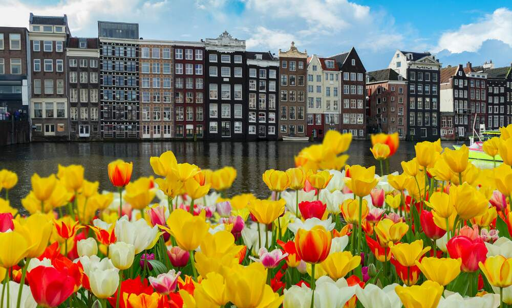 The Dutch housing market: Another tulip mania?