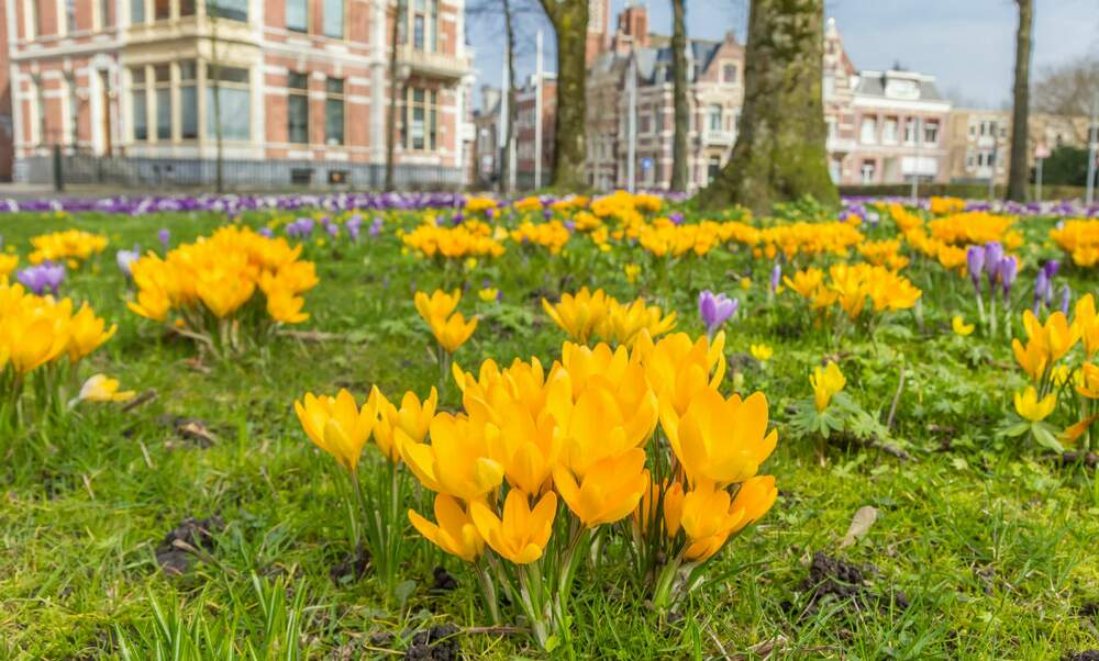 Spring is coming to the Netherlands