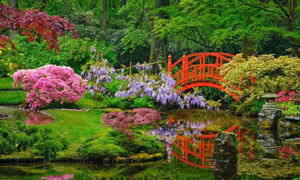 Image result for a japanese garden