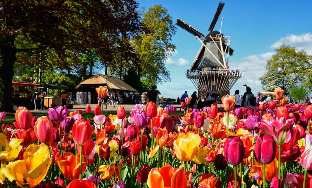 a brief history of tulips a k a tulpen. Black Bedroom Furniture Sets. Home Design Ideas