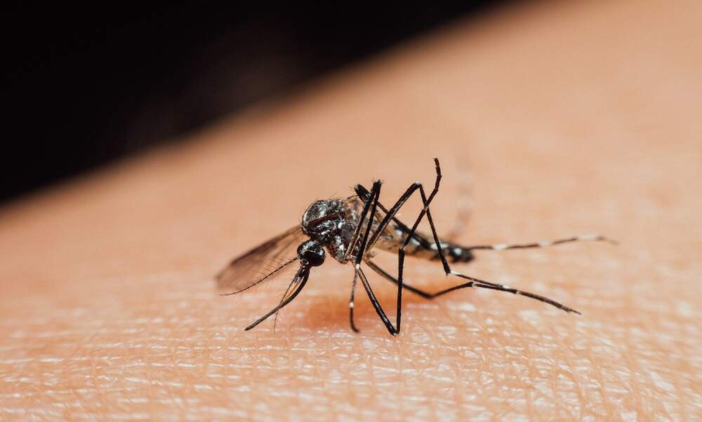 Seven ways to prevent getting bitten by mosquitoes