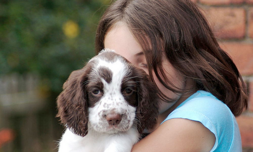 What to do when your pet goes missing in the Netherlands
