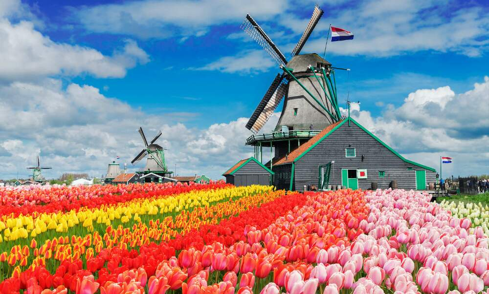 Video 5 things you will love hate about the Netherlands
