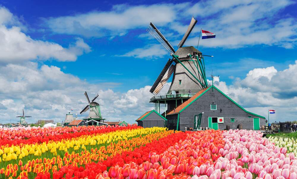 Dutch windmills | Attractions & sightseeing in the Netherlands