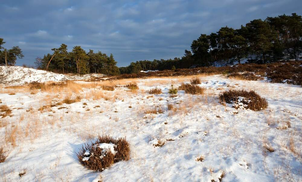 Could snow be coming to the Netherlands?