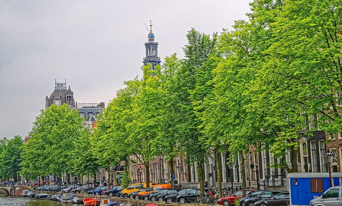 Walk along the Springsnow elm tree route of Amsterdam