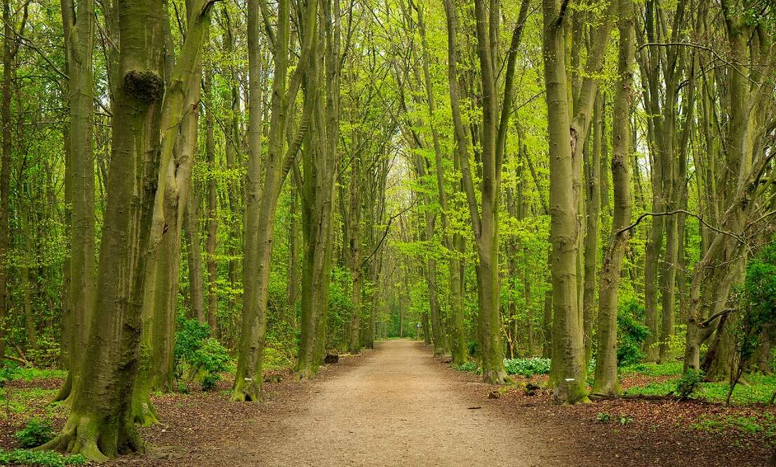 100 million trees to be planted in the Netherlands by 2030