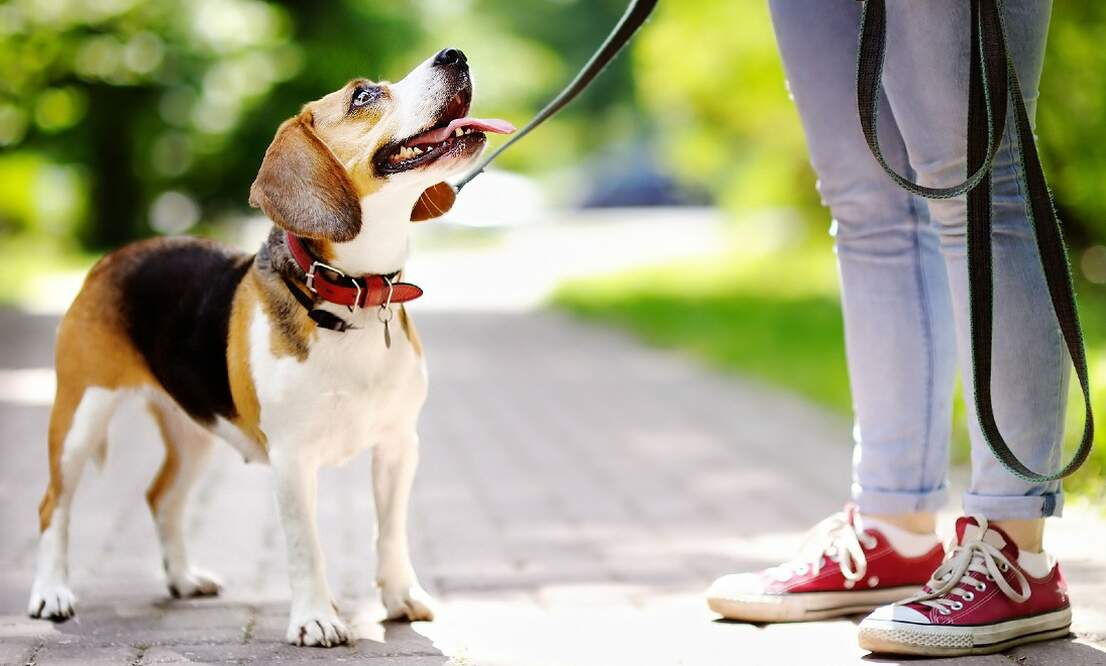 Protect your pooch! Dog owners warned about cruel prank