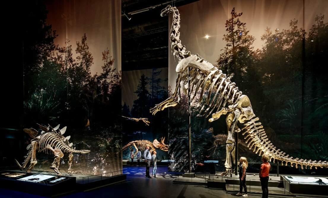 Dutch museum wins European Museum of the Year award