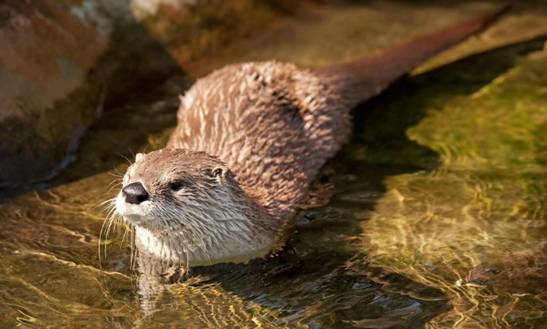 Return to nature: Dutch environment slowly stabilising