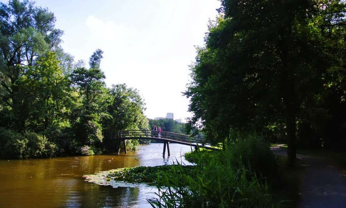 Interesting facts about The Hague Forest