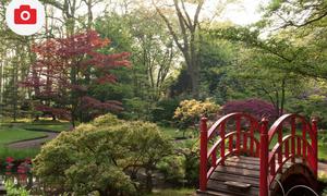 Japanese Garden - Spring Opening 2012