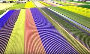 A beautiful bird's-eye view of the Netherlands