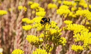 From bus stops to bee stops: one Dutch city is going the extra mile