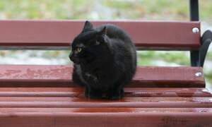 Cat hitches a ride, travels 145 kilometres to Amsterdam