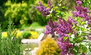 Botanical gardens in the Netherlands