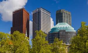 Residents of The Hague to receive a free tree to make the city greener