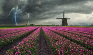Code yellow: Storms expected in the Netherlands