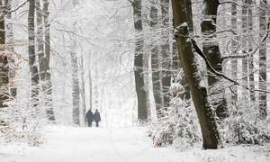 Will the Netherlands get a white Christmas this year?