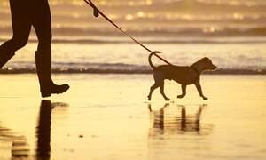 [The Hague] Dogs allowed on beach