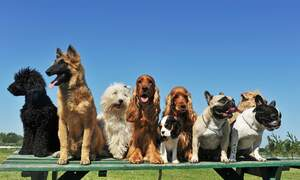 Find out which dog is the best dog in the Netherlands
