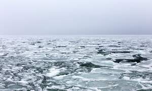 Dutch art from the Ice Age discovered in the North Sea