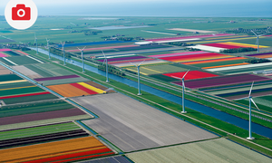 Amazing Photos of Tulip Fields in the Netherlands