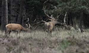 Holland wildlife
