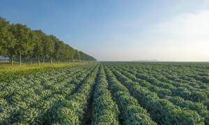 Dutch agricultural sector world's 2nd largest & growing