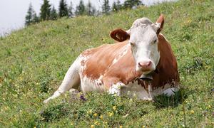 Sale of antibiotics for livestock down 50 percent