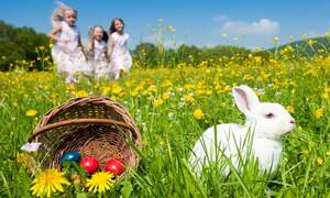 Easter - Dutch egg facts