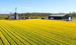 Dutch agricultural exports grew to record-high in 2015