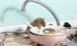 The Netherlands has seen an increase in pests and vermin in 2020