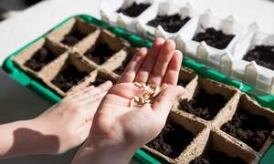 Dutch seed breeder wins prestigious World Food Prize