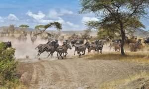 Tanzania and Zanzibar: the tropical destinations this winter!