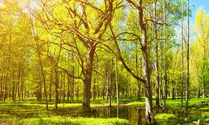 Tiny forests to be planted in 12 Dutch municipalities