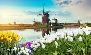 [Quiz] How Dutch are you?