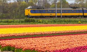 Free tea and coffee at six major Dutch train stations this week
