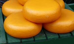 [Video] How traditional Dutch Gouda cheese is made