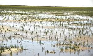 Wadlopen (mudflat walking) in the Netherlands
