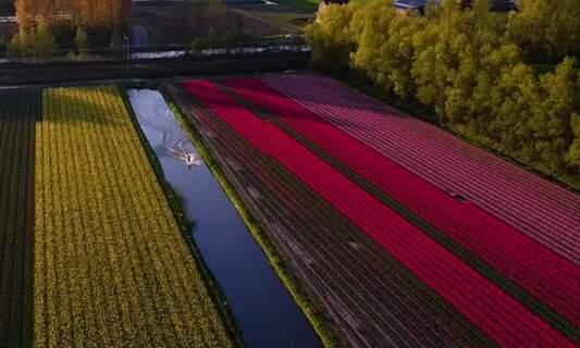 Wakeboarding between the flower fields