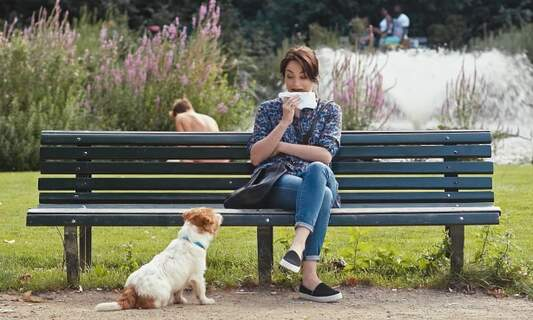 The Tale of Kat and Dog: A Holland Cool Movie