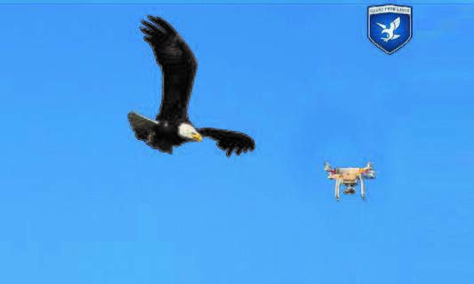 Dutch police looking to use eagles to catch drones